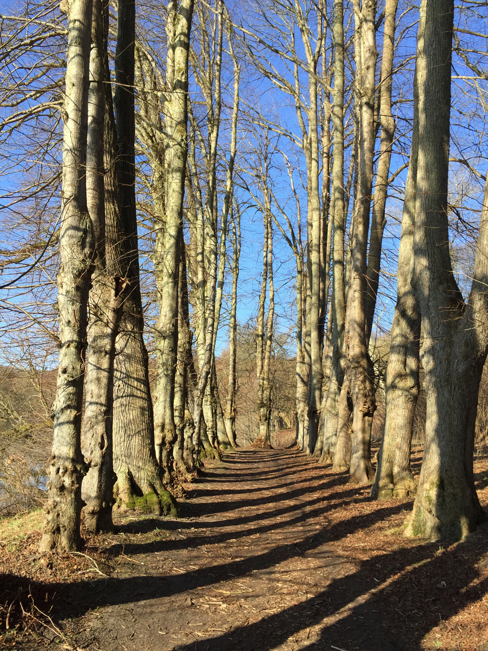 Natur ved Hald Hovedgaard