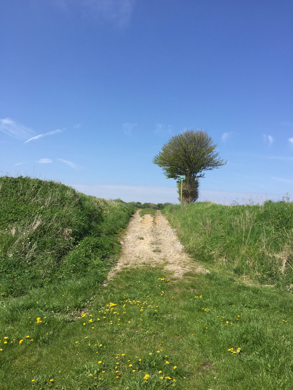 Rævetræf - Vejen ned til stranden